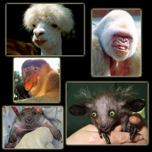 funny_animals